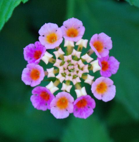 Delicate symmetry